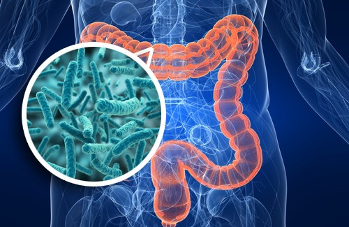 Antibiotics and IBS_intestinal flora