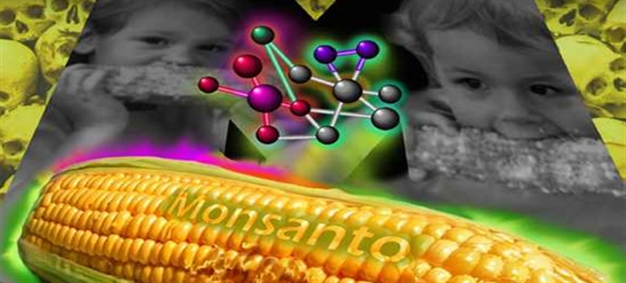 Why Do Some GM Crops Contain the Epicyte Gene?