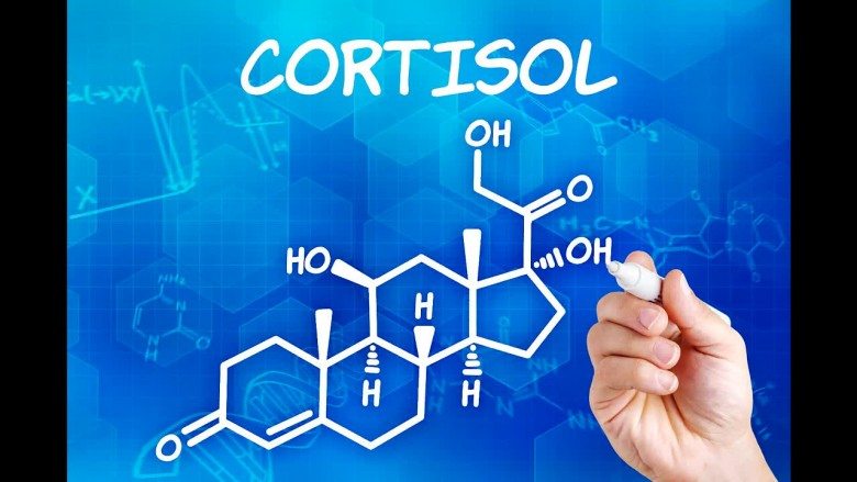 Cortisol: The True Cause of Heart Disease?