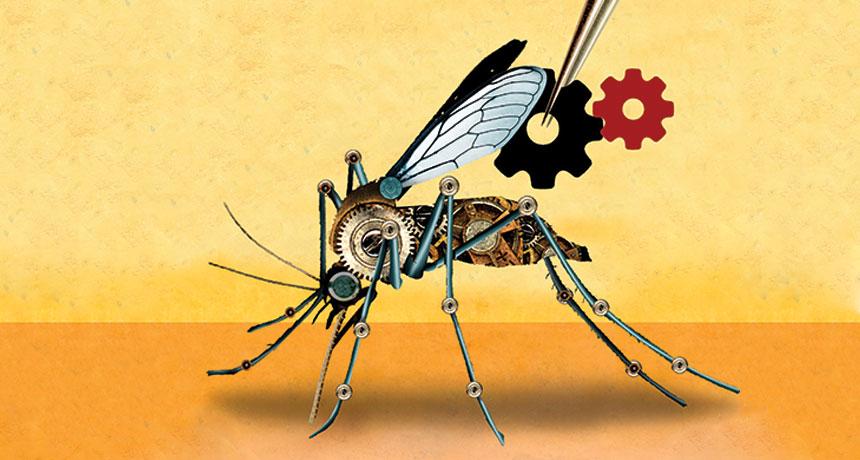 CRISPR mosquito
