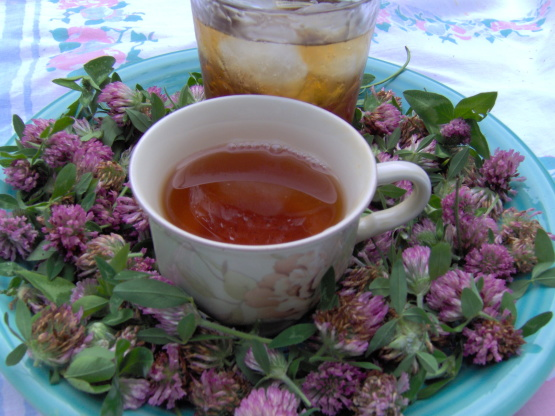 Blood Cleansing Herbs_red clover tea