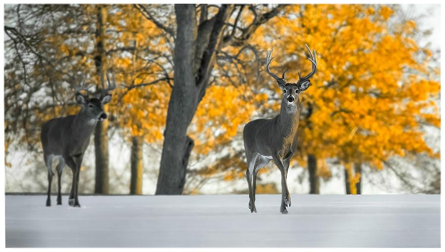 Snow In Autumn by Garett Gabriel